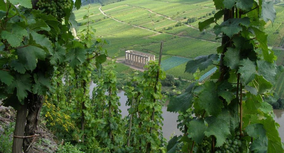Trier en omgeving: Weinkulturpfad | Mooistestedentrips.nl