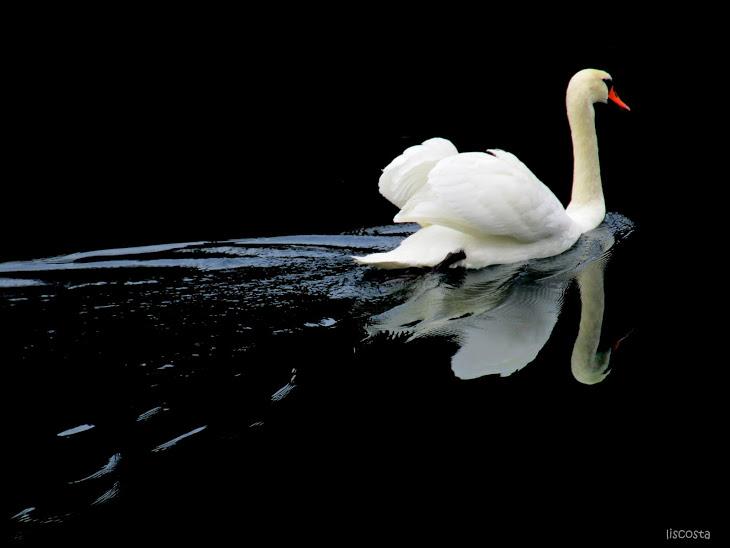 Fotografia em Palavras: Espelho de água