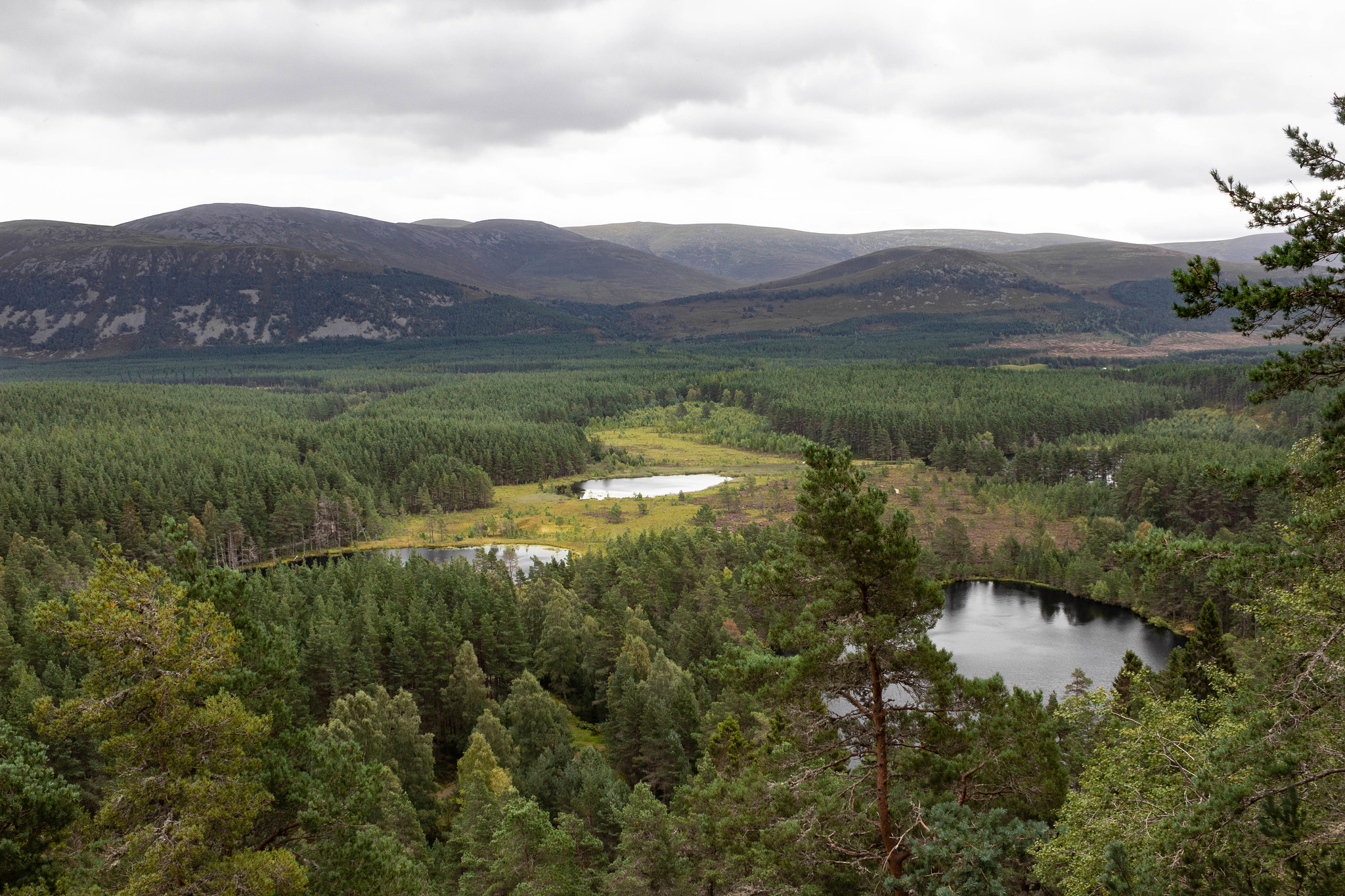 View over Uath Lochans, Cairngorms National Park, Scotland.