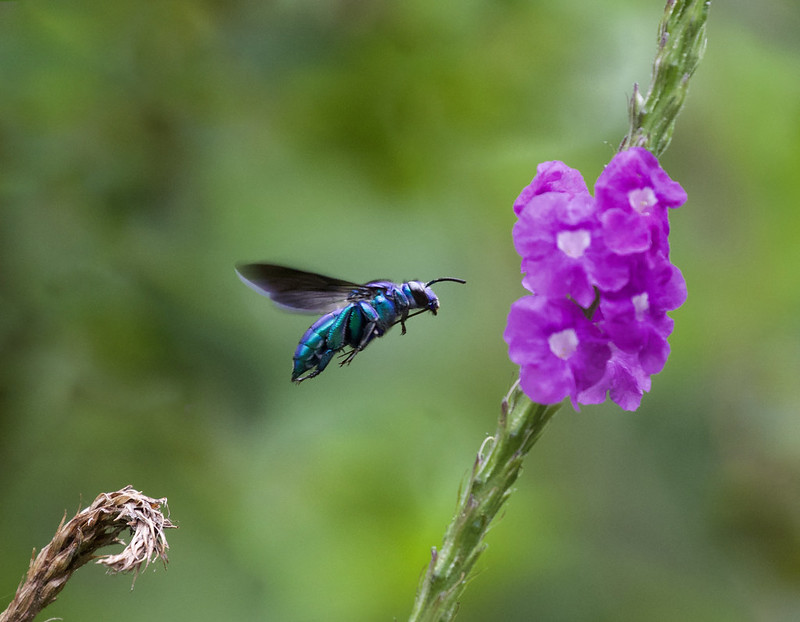 Insect_Ascanio_MAnu_199A9917