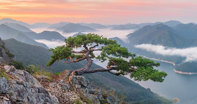 Celebrity tree