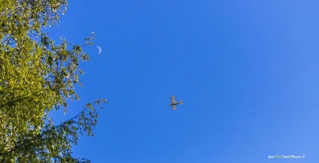 Tree - moon - plane!