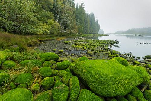 1909_1416 Nimpkish River