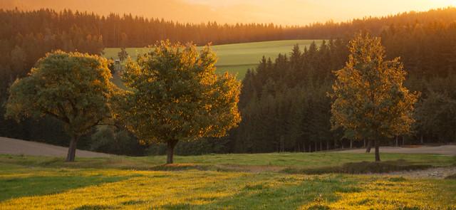 Das goldene Licht der Herbstsonne