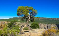 Dragon Point Trail #4