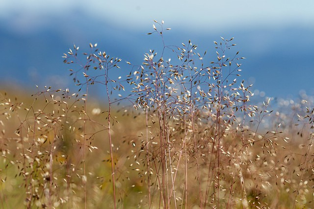 Assise dans les hautes herbes en compagnie du vent. (seated in the tall grass in company of the wind)