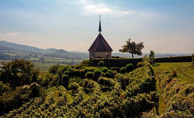 Markgräflerland - Walking in the vineyards