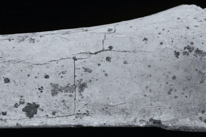 Fragment of a long bone showing a grid like fracture pattern