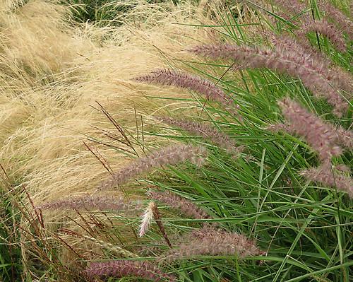 September grasses and plants in the Dublin Botanical Garden, Ireland