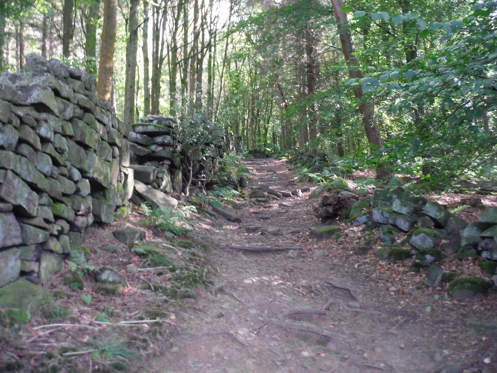 Path up through Wragghouse Plantation SWC Walk 348 - Ladybower Inn Circular (via Derwent Edges and Strines)
