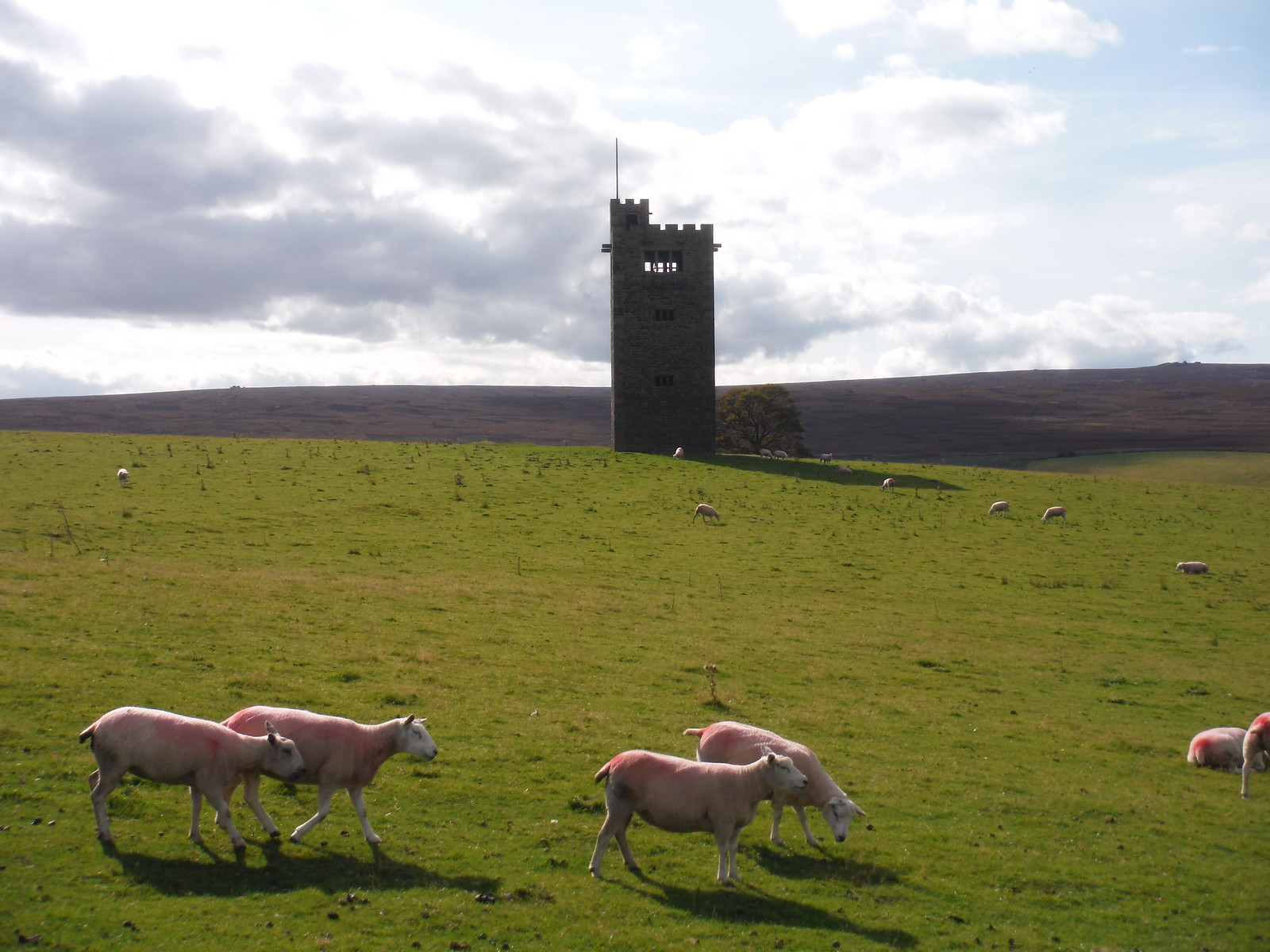 Boot's Folly, some sheep and Derwent Edge SWC Walk 348 - Ladybower Inn Circular (via Derwent Edges and Strines)