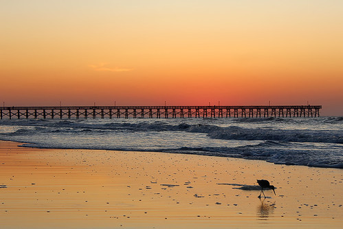 beach sunrise pier ocean atlantic shorebird waves cherrygrove myrtlebeach south carolina