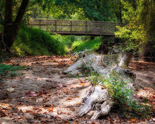 tree landscape bridge columbia nature maryland unitedstatesofamerica river