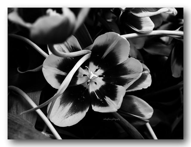 Blooming in the garden.