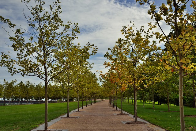 A Walking Path Lined with Trees (Gateway Arch National Park)