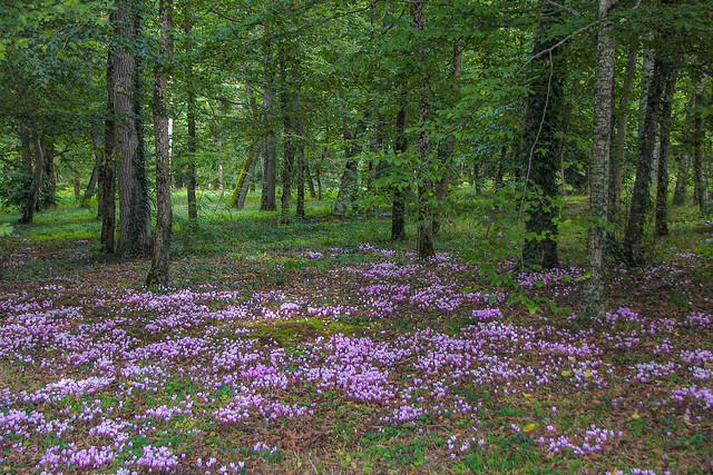 Clairière fleurie