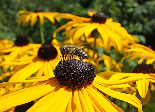 hardworking bee