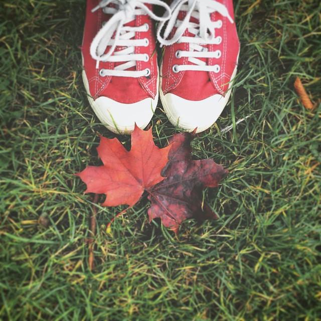 Autumn at my feet