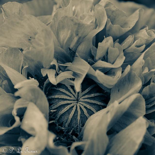 La nuit toutes les fleurs sont grises. 09