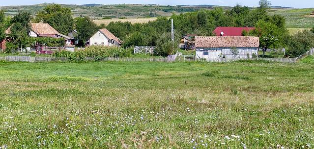 Valea Sasului