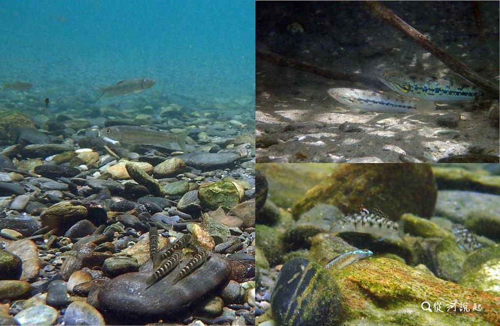 1_新城溪天堂般的上游,清澈溪水與豐富生態。