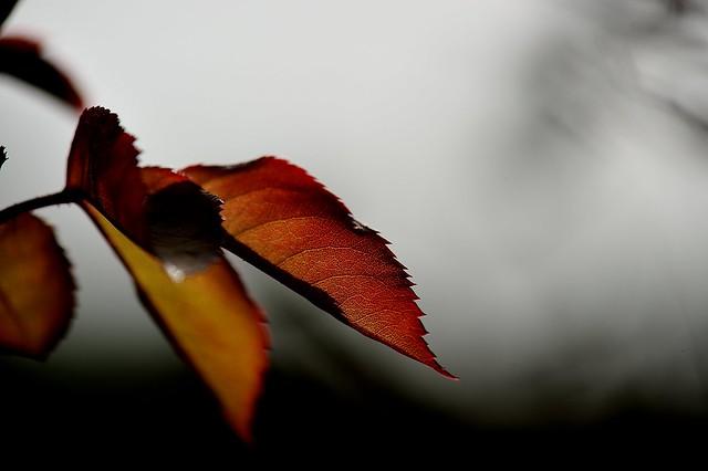 C'est l'automne.