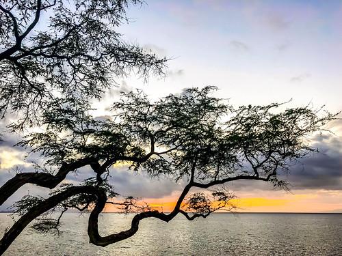 america hawaii maui usa unitedstates unitedstatesofamerica wailea waileaelua sunset tree kihei fav10 fav25 fav50 fav100