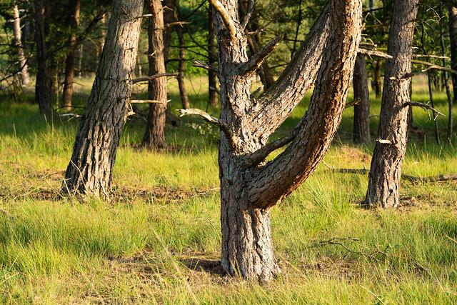 Distinctive Tree