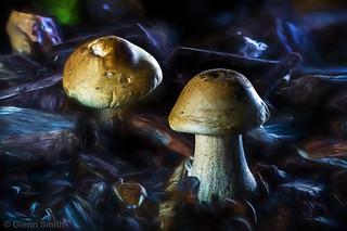 Mushroom Twins