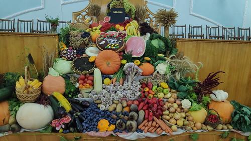 Harvest_2