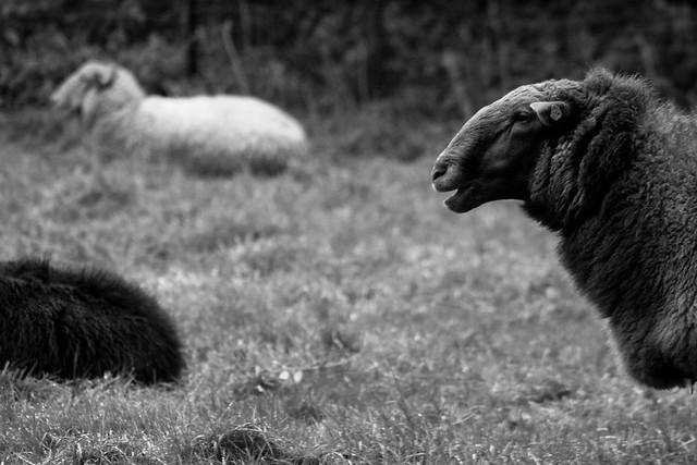 Nutztierfotografie