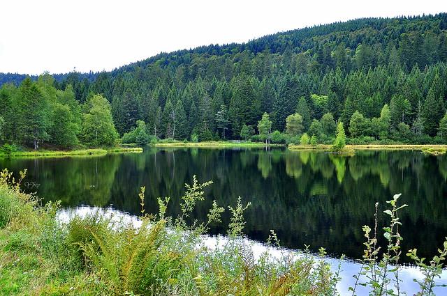 Symphonie en vert au lac de Lispach - Vosges