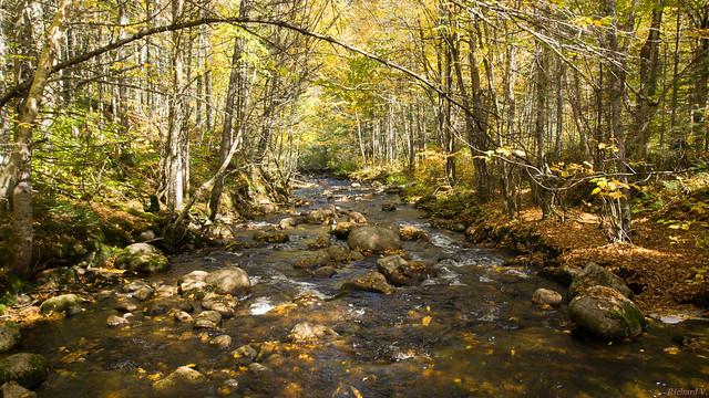 Automne, autumn - Parc Nationale de la Jacques-Cartier, PQ, Canada - 4621