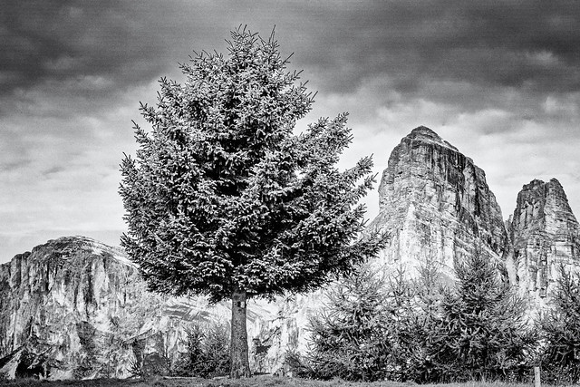 The Tree and the Mount (II)...