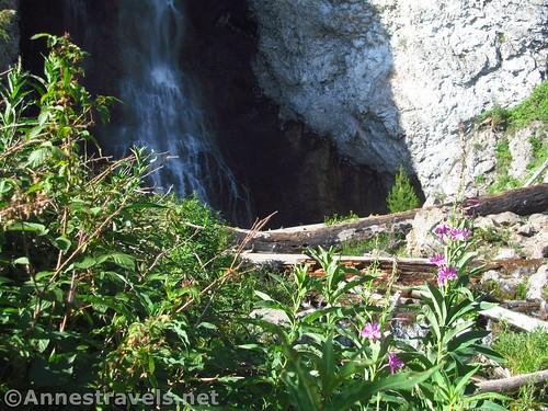 Wildflowers near Fairy Falls, Yellowstone National Park, Wyoming