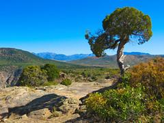 Dragon Point Trail #8