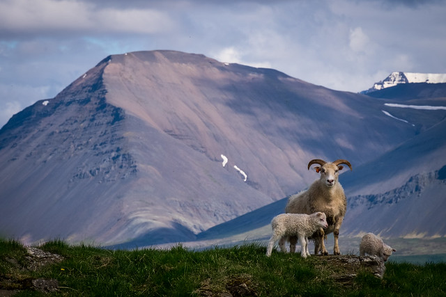 family Iceland scene