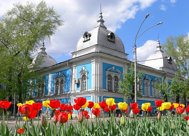 Siberian tulips
