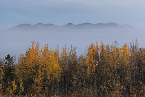Ibex Valley Mist