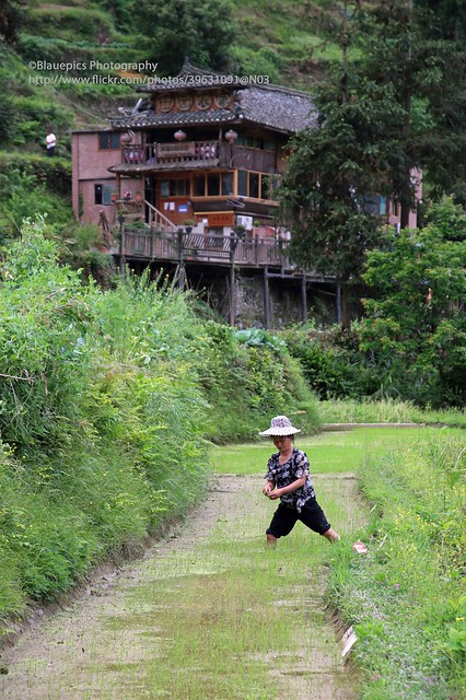 Kaili, upper Langde Miao village, work in the ricefield