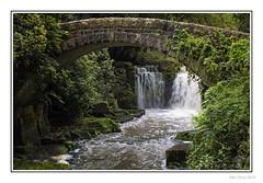 Jesmond Falls
