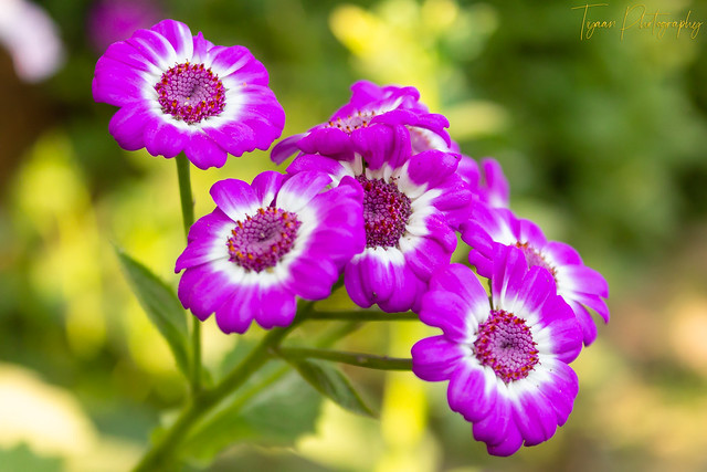 A View Of Flower In Natural Background