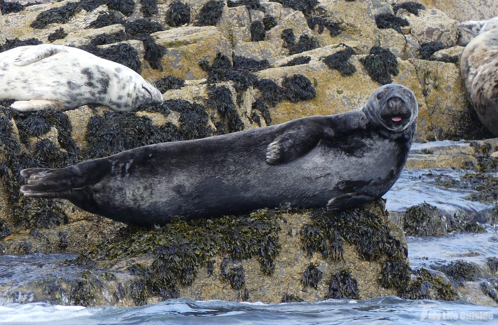 2019_05_0090 - Farne island Seals