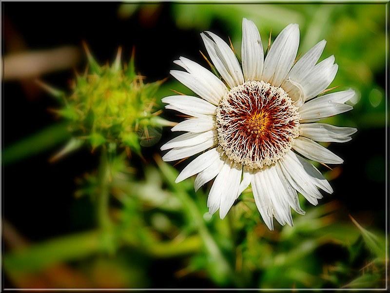 Au jardin des plantes. - Page 6 48828520341_c059ae237f_c