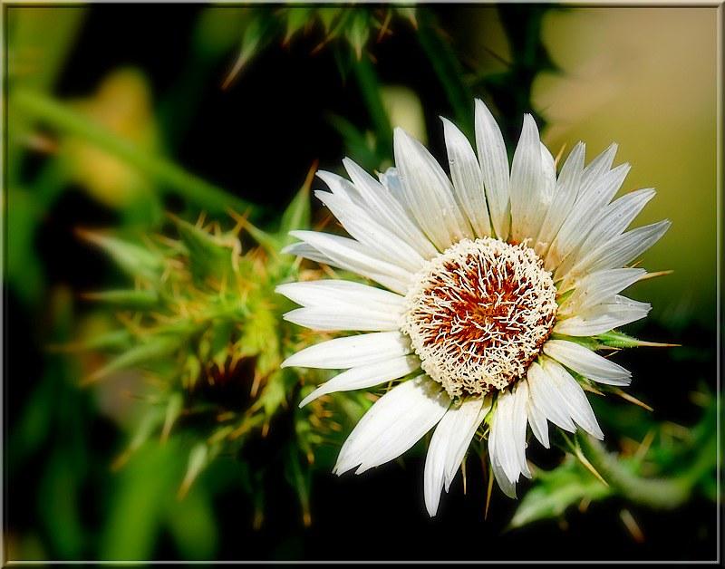 Au jardin des plantes. - Page 6 48828679777_950cd09fd4_c