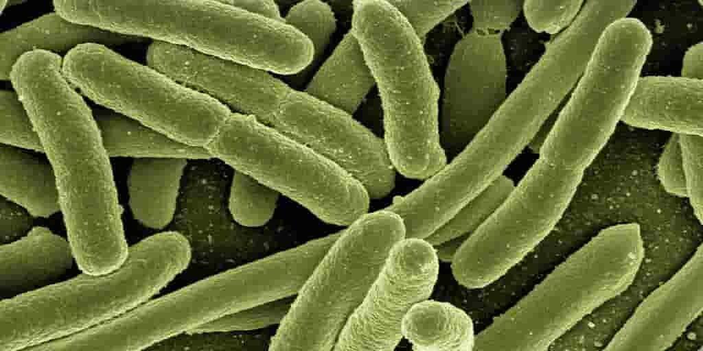 bactéries-nouveaux-antibiotique-armes-moléculaires