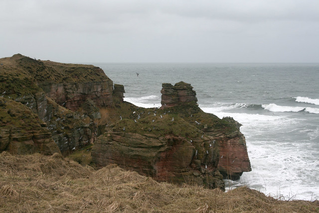 The Berwickshire coast path north of Berwick-upon-Tweed