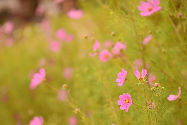 Alegre primavera