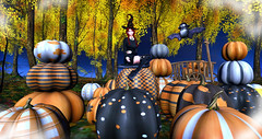 A Witchy Pumpkin Patch