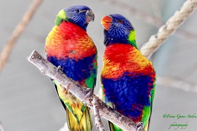 Sing a rainbow....